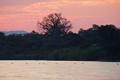 Zambia_  20162016-05-0216-44-16 (C_Baltrusch) Tags: christian safari afrika zambia sambesi selfdrive sambia zambeziriver baltrusch
