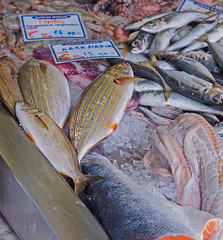 Freshly Caught Fish for sale ( Fishmonger - Myrina Town - Lemnos (Greece) Olympus OMD EM5II (markdbaynham) Tags: island greek north aegean hellas evil olympus greece grecia gr zuiko omd csc oly mz limnos hellenic m43 zd mft lemnos myrina mirrorless micro43 mzuiko m43rd em5ii zuikolic