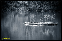 B&W Island (mikesteph0) Tags: lake cold tree nature wet water scenery outdoor lr4