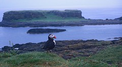 Puffin Landscape (sjdugdale1) Tags: birds scotland wildlife puffin seabirds lunga