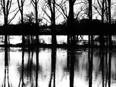 Vater Rhein (Marve2011) Tags: white black landscape deutschland olympus monochrom rhine rhein zuiko nordrheinwestfalen rheinland e600 hochwasser 1454