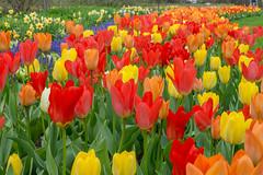 Spring of Glory
