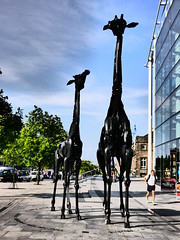 Wir Giraffes (NikWatt) Tags: scotland edinburgh panasonic handheld eginburgh pansonic greatcolors greatscots edinburghphotographers panasonicg5