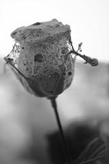 Rosas para yesus (Arlekom) Tags: dead tristeza minas cementerio muerte cruz dolor lavalleja