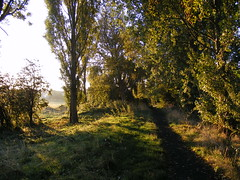 MORNING TIME SUN ON THE PATH OF TREES AT ROCKFORD FIELDS IN HULL U.K. (zxbill55) Tags: city autumn trees wild sky plants sun tree grass clouds sunrise golden shadows tracks kingston shade hull dappled rockford