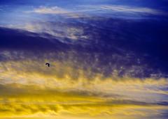 Colecionando Fins de Tarde (Luci Correia) Tags: sunset pordosol sky brasil clouds contraluz dark cores landscapes scary gloomy céu triste nuvens crepusculo ceu pernambuco creep escuro obscuro gótico sereno brumas melancólico nostálgico sunsetbrazil soturno sunsetbrasil lucicorreia lucicorreiafotógrafa lucicorreiafotografia colecionandoluzes fimdetardepernambuco pordosolpernambuco ceunordestino pordosolbrasileiro