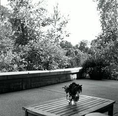 Arboretum_120 1 (yuan2003) Tags: bw white black state arboretum penn psu
