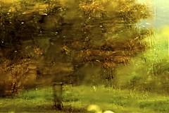 Surreal Landscape Bulla (maginoz1) Tags: landscape spring flora frog jasmin gumtree bulla september2013