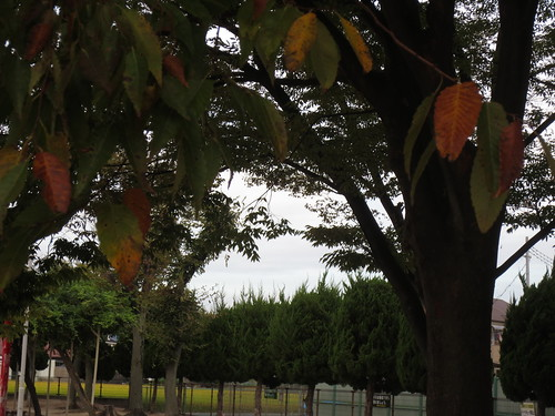 葉っぱの色づき