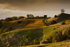 Geysers Road Vineyard (Tom Moyer Photography) Tags: california vineyard vines wine country sonomacounty
