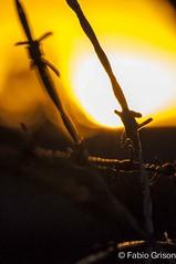 Cercado (Fabio Grison ) Tags: sol laranja amarelo cerca arame farpado fimdetarde preso cercado