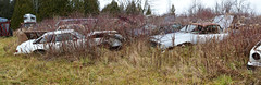 Panorama 146 v2 (collations) Tags: ontario abandoned autos derelict automobiles rockwood junkyards wreckers autowreckers autograveyards mcleansautowreckers macleansautowreckers carcemeteries