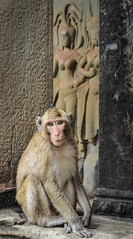 Portrait of a monk.. (deeper end of the pool) Tags: animal temple monkey cambodia angkor wat