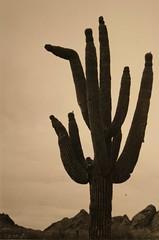 Anglų lietuvių žodynas. Žodis Arizona reiškia n Arizona (JAV valstija) lietuviškai.