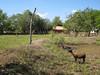 IMG_1496 (Tehhen) Tags: animals dominicanrepublic repúblicadominicana clavellina dajabón