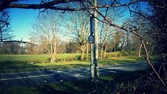 50 blight on A523 (EthelRedThePetrolHead) Tags: road sign nokia cheshire misc wtf 2014 lumia adlington worboys a523 lumia920 ethelredthepetrolhead