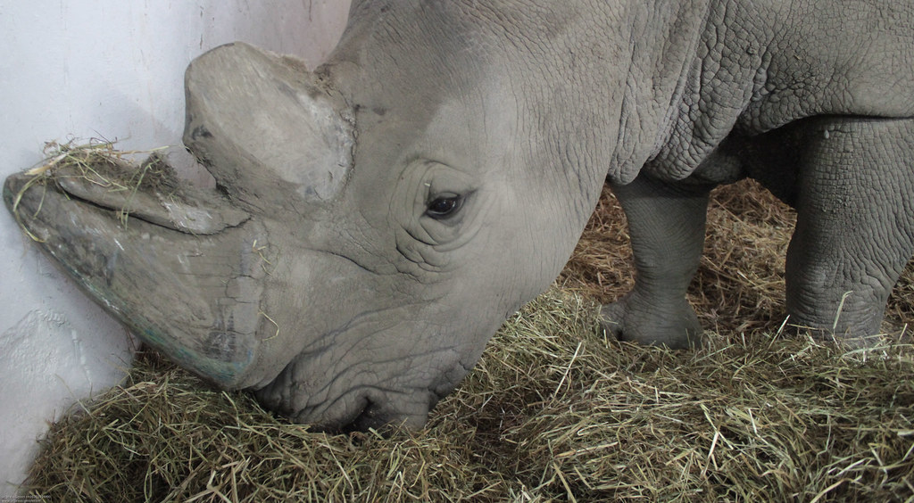 The World 39 S Newest Photos Of Dortmund And Rhino Flickr