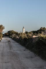 Formentera12 114 (Sebas Adrover) Tags: sky españa dog lighthouse rural faro island spain nikon mediterranean camino d70 path perro cielo formentera isla mediterráneo balearicislands balearic balears illesbalears