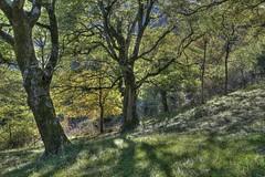 20131025 - Biccari - HDR - 028 (orsoyoghurt) Tags: alberi ombre rami boschi daunia subappennino biccari orsoyoghurt