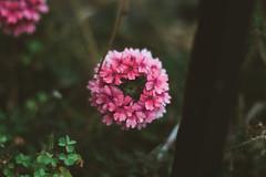 Valentine's Day (PabloGoVegan) Tags: flowers flower love del canon de 50mm los day bokeh amor flor dia valentine valentines enamorados