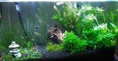 year2013 fishtank aquarium house home 2013