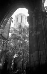 Sainte Croix et Sainte Eulalie (Agilulfe_75005) Tags: agfaapx100 barcelone cloître