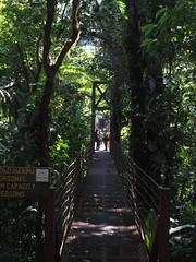 """La Réserve de Monteverde: le pont suspendu <a style=""""margin-left:10px; font-size:0.8em;"""" href=""""http://www.flickr.com/photos/127723101@N04/26339438754/"""" target=""""_blank"""">@flickr</a>"""