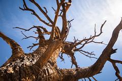 IMG_5165 (Lastexit) Tags: california desert joshuatree yuccavalley