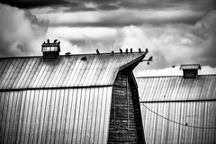 BIRDS (Explored 5/27/16) (qualistat) Tags: roof bw birds clouds barn alberta