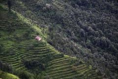 Mukteshwar, India (Chandrima Sarkar) Tags: trees india nature landscape hills mukteshwar