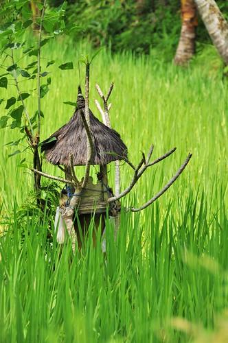 bali nord - indonesie 39