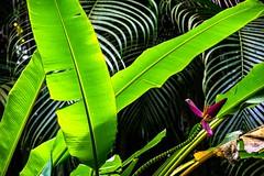 The jungle (Igor Sorokin) Tags: travel plants usa flower garden lens hawaii us nikon zoom scenic telephoto jungle kauai botanic nikkor dslr leafs furn 18300 d5300 nikonflickraward