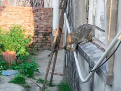 P4085749 (daisuke1230) Tags: cat olympus neko em  m43