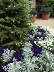 Blue, White, Grey, Green (mystuart) Tags: blue white tree garden nc spring asheville outdoor landscaping blossoms pots fir biltmore arrangement containers planted