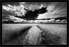 Voigtlander Heliar-Hyper Wide 10mm f/5.6 Aspherical on Sony A7R IR(720nm) (Dierk Topp) Tags: wood trees bw nature clouds sony infrared sw superwide 720nm a7rir voigtlanderheliarhyperwide10mmf56aspherical