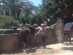 Jessica_Emmerich_Horsemanship_Andalusien_06 (jessica_emmerich) Tags: hotel natural jessica hurricane second andalusien spanien tarifa kurs horsemanship emmerich hippica