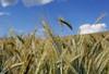 Getreidefeld im Mühlviertel (rubrafoto) Tags: outdoor sommer landwirtschaft wolken landschaft wetter stimmung getreide mühlviertel ottensheim wolkenstimmung getreidefeld ooe witterung wolkenhimmel wetterbild sommerlandschaft