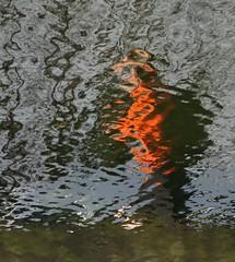 Man Wearing A Hat (trailrunner55) Tags: ireland dublin distortion blur reflection water grandcanal manwalking