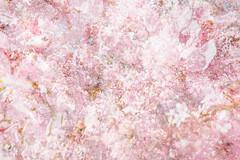 Sakura 18 (pni) Tags: flower tree suomi finland helsinki multipleexposure sakura helsingfors tripleexposure multiexposure skrubu pni pekkanikrus