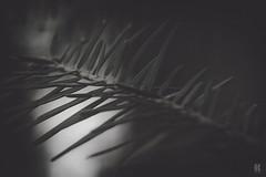 Dark Nature (KromOner) Tags: trees sunset art nature forest canon dark austria design woods solitude mood quiet silent details atmosphere minimal silence needles kromoner