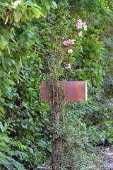 MAILBOX GARDEN (concep1941) Tags: gardens mailbox orchids outdoor