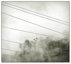 Minimal fog (Massimo Guercini) Tags: trees italy lines fog alberi blackwhite nikon italia atmosphere minimal vineyards rows nebbia atmosfera veneto linee collieuganei vigneti filari euganeanhills d5000