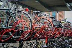 BP_20160626_124616 (Belinda Put) Tags: ncnuitje denbosch fotorally rood typisch hollands