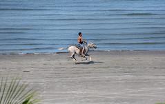 A gallop on the sand at Ometepe (RiserDog) Tags: horse lake nicaragua centralamerica gallop ometepe lakenicaragua