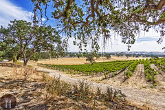 Wine Country California-Central-Coast (randyandy101) Tags: california trees vines wine bluesky hills winery vineyards winecountry pasorobles californiacentralcoast highway46