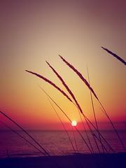 Remember last summer... (marsider07) Tags: sunset summer reeds colours purple pastel