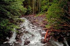 Rush Creek - Gifford Pinchot National Forrest, WA, USA           #HDR #HDRPhotography #LandscapePhotography #Landscapes #LongExposure #LongExposurePhotography #Photography #Rivers #RushCreek #WaterscapePhotography #Waterscapes (raymanningphotography) Tags: longexposure photography landscapes rivers hdr waterscapes landscapephotography rushcreek hdrphotography longexposurephotography waterscapephotography