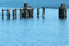 Old Dock Wood (PGK88) Tags: wood old blue seascape abandoned water harbor dock pilings posts derelict