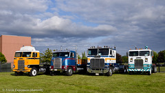 Freightliner COE Lineup (Truck Exposure) Tags: cabover