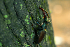 The Forest King (johnny.cvetkovic) Tags: life portrait macro green nature beautiful closeup canon bug insect eos king dof bokeh earth depthoffield 60mm